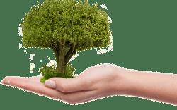 Hier pflanzt Du beim surfen Bäume - Omas for Future