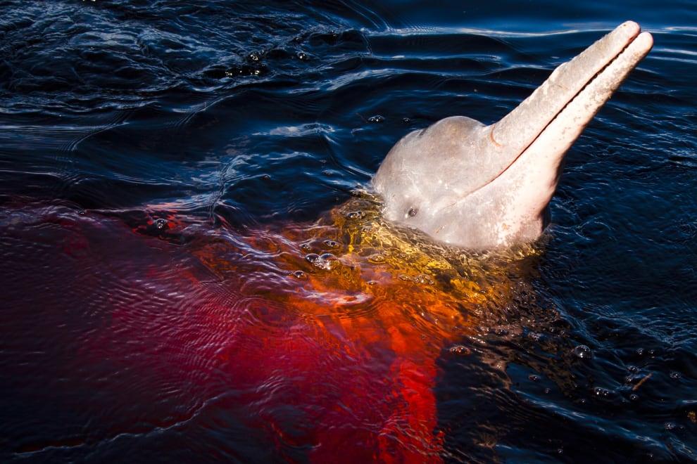 Um boto cor de rosa saindo uma água avermelhada