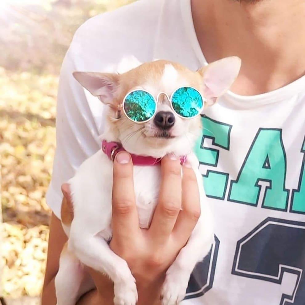 Cachorro pequenino na cor branca e coleira rosa no pescoço, vestindo óculos de sol espelhado. Uma pessoa o segura pela mão direita apoiando na palma de sua mão o peito e patas.