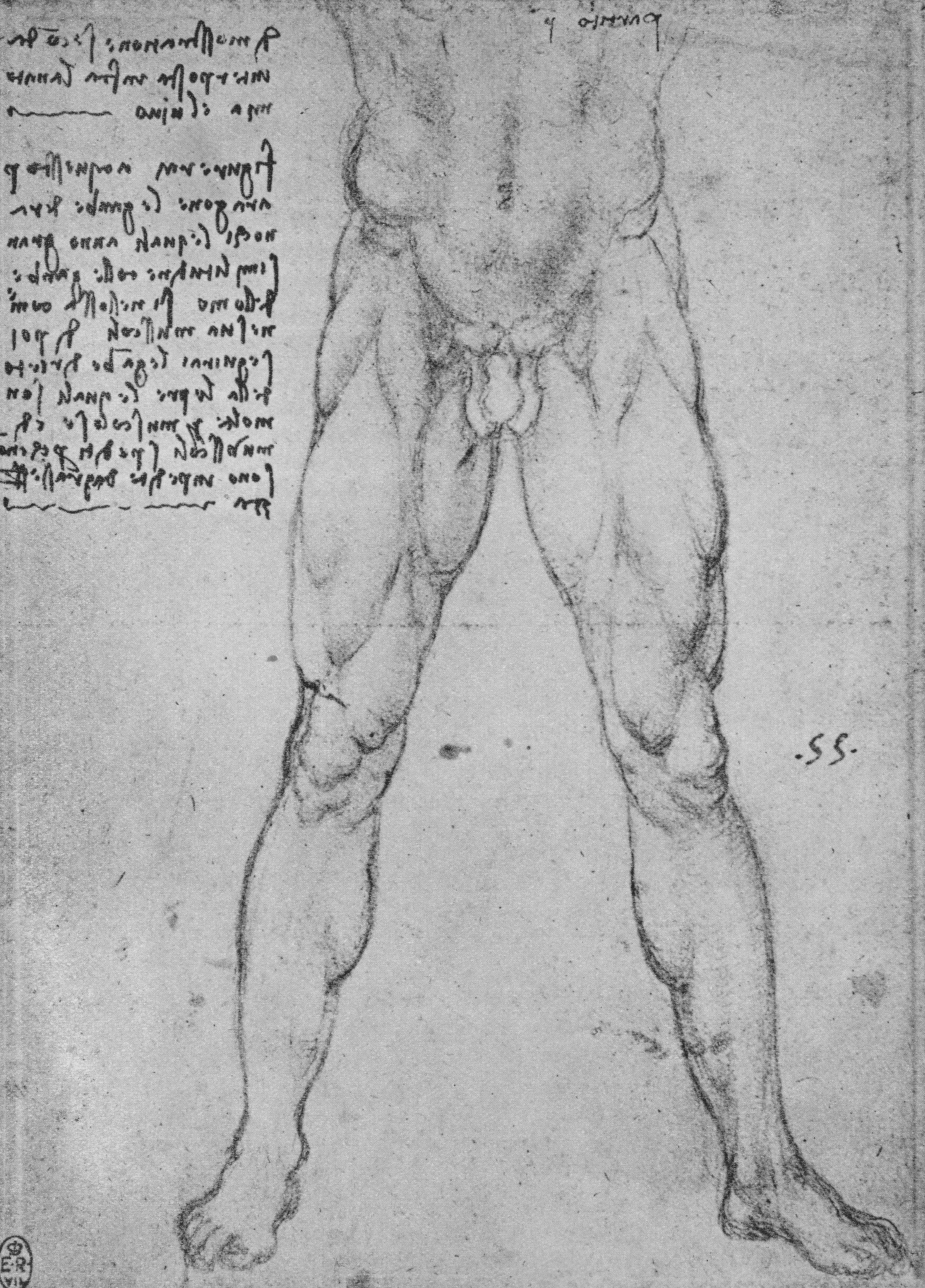 desenho de pênis feito por Leonardo da Vinci