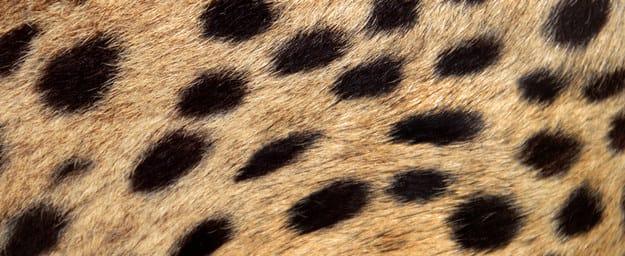 Pontos pretos esfumaçados em uma camada castanho claro.
