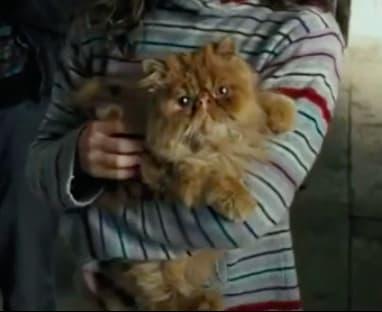 Orange, fluffy cat