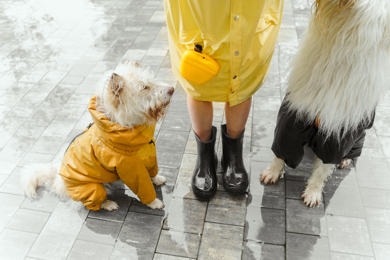 Um cachorro com uma capa de chuva