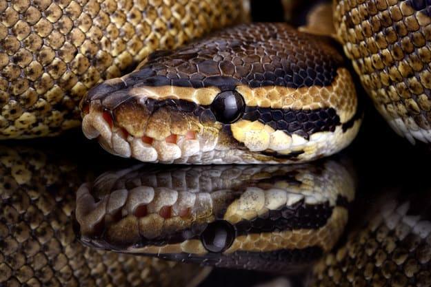 Foto de uma cobra.