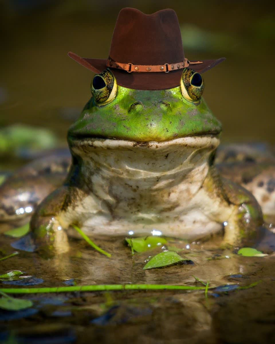 A big froggy in a cowboy hat