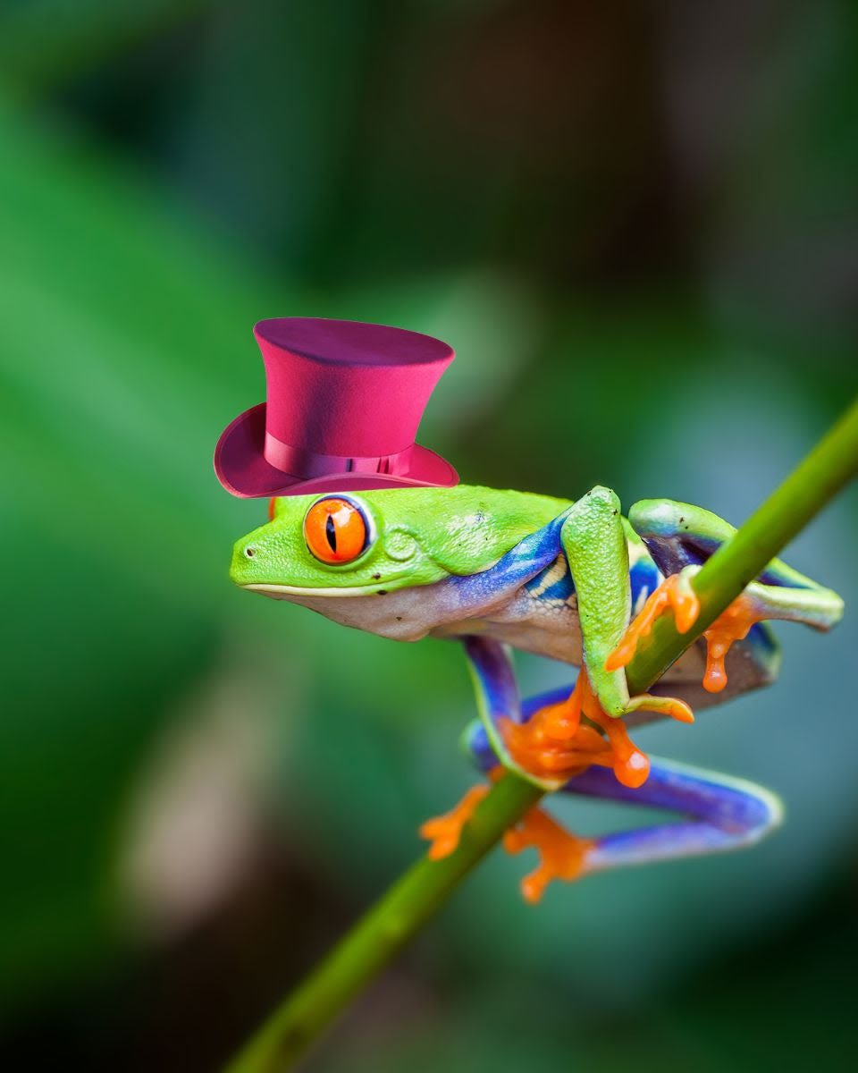 Green tree frog in a flashy top hat