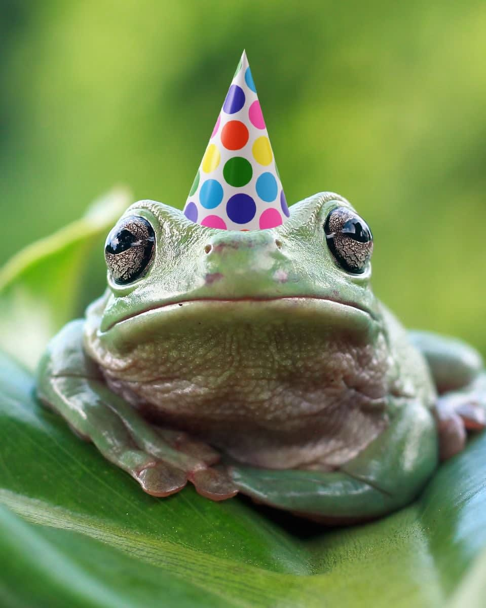This is a cute frog wearing a party hat because it's his birthday