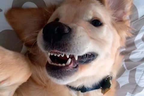 """Cachorro """"sorrindo"""" de aparelho"""