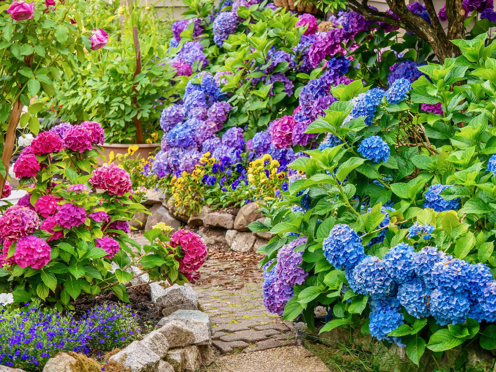 Foto de um jardim com flores