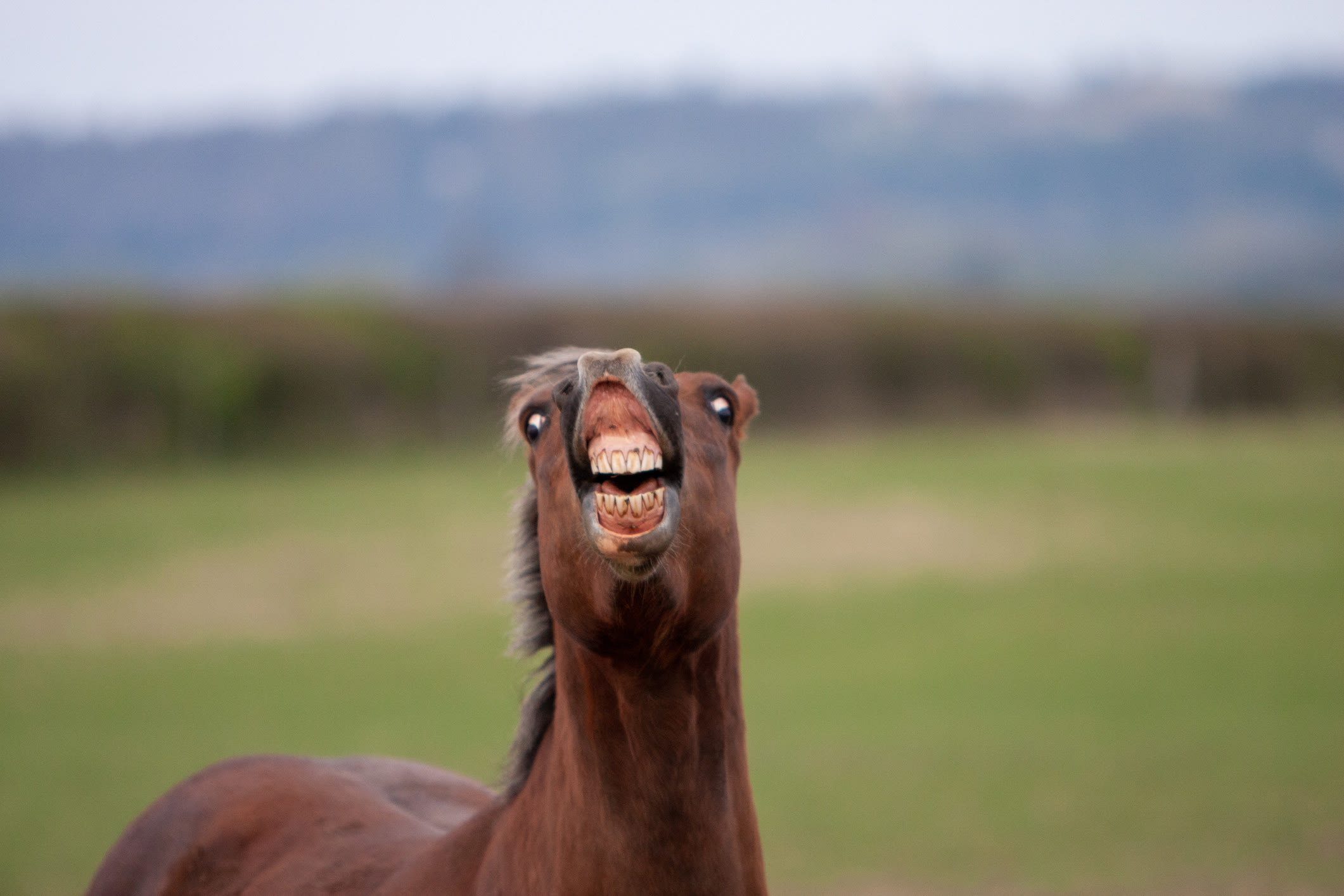 a horse neighing with its lips flapping