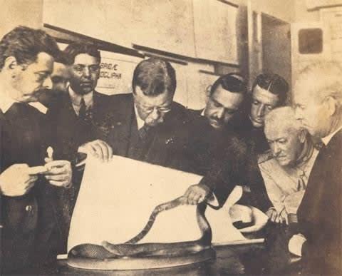 Theodore Roosevelt olhando uma cobra com a equipe do Instituto.