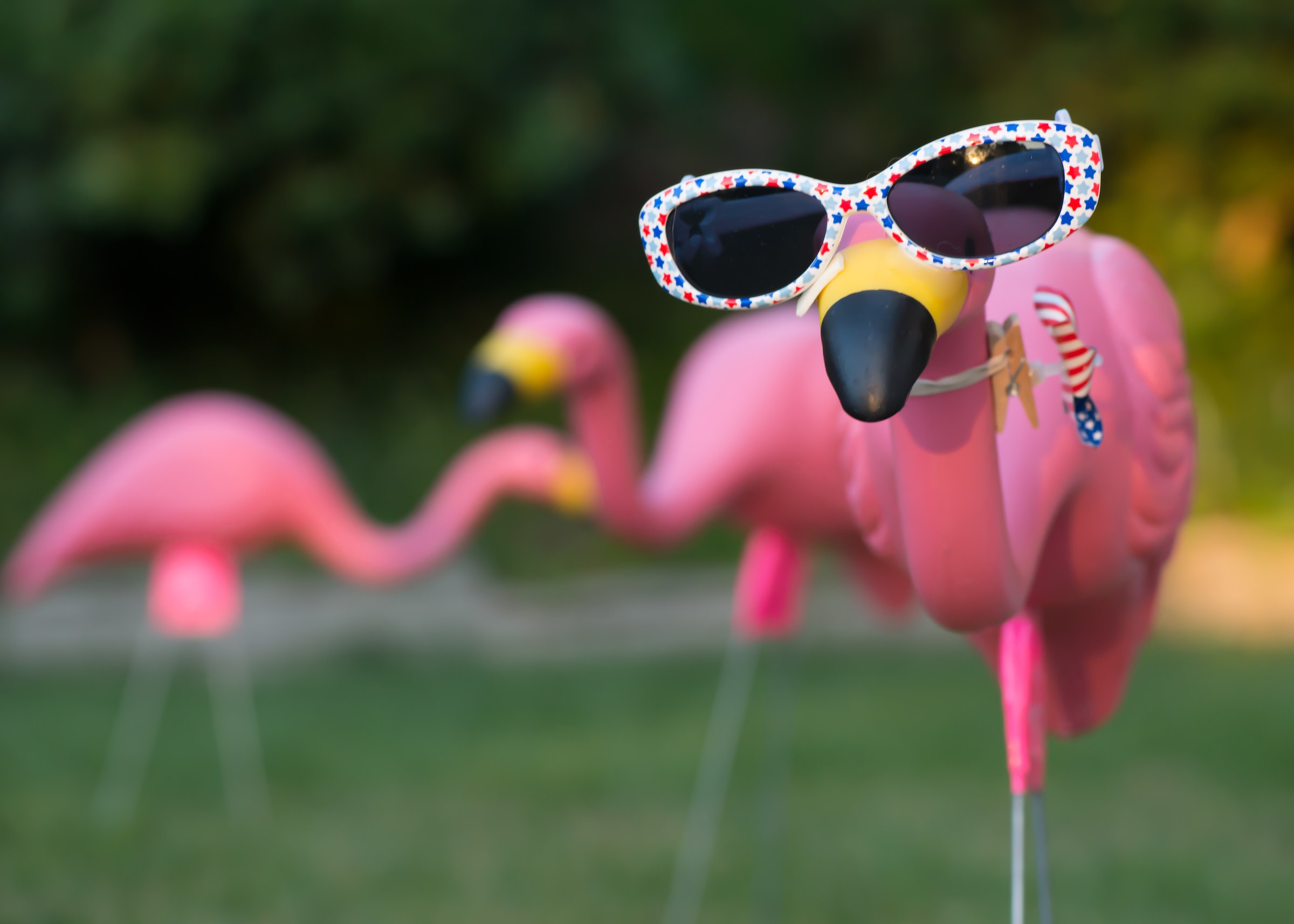 Three plastic lawn flamingos, one facing the camera has polka dotted sunglasses