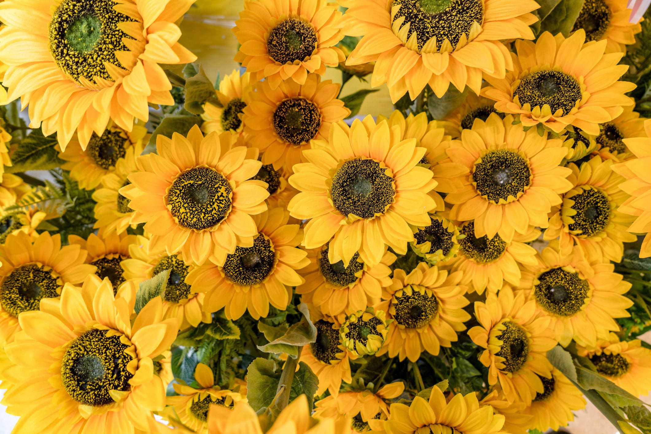 A bunch of wild sunflowers