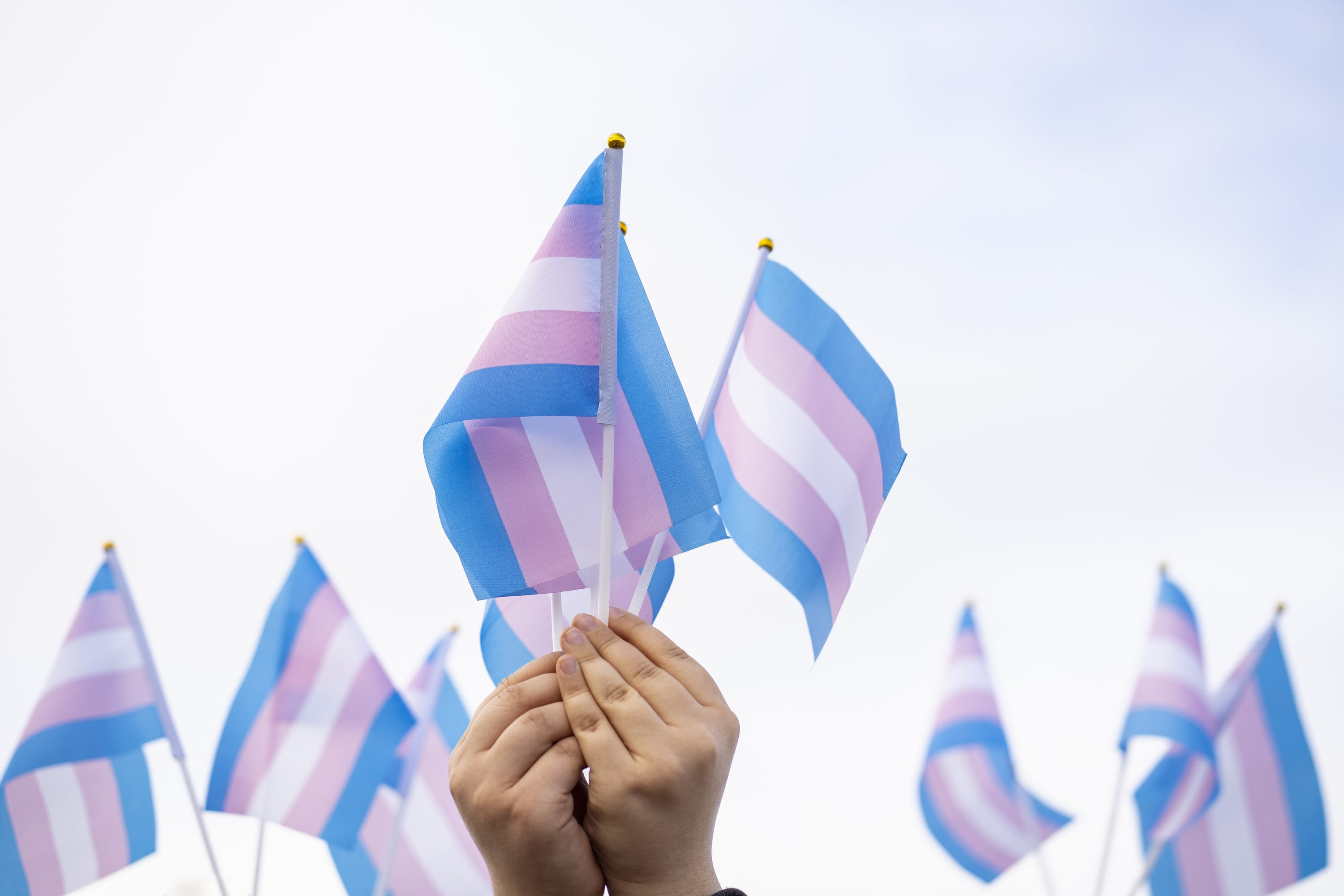 An image of hands holding up flags for Trans Rights