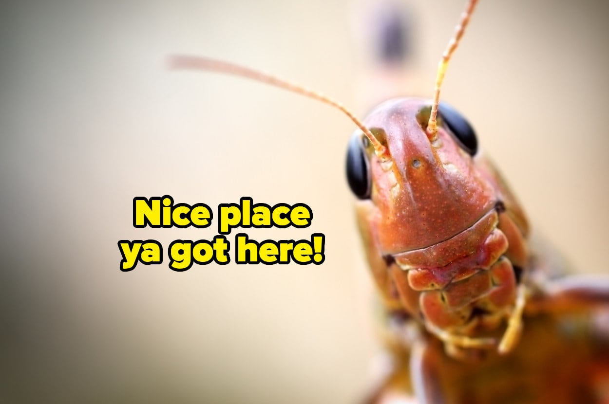 """""""nice place ya got here"""" over a cricket's face close-up"""