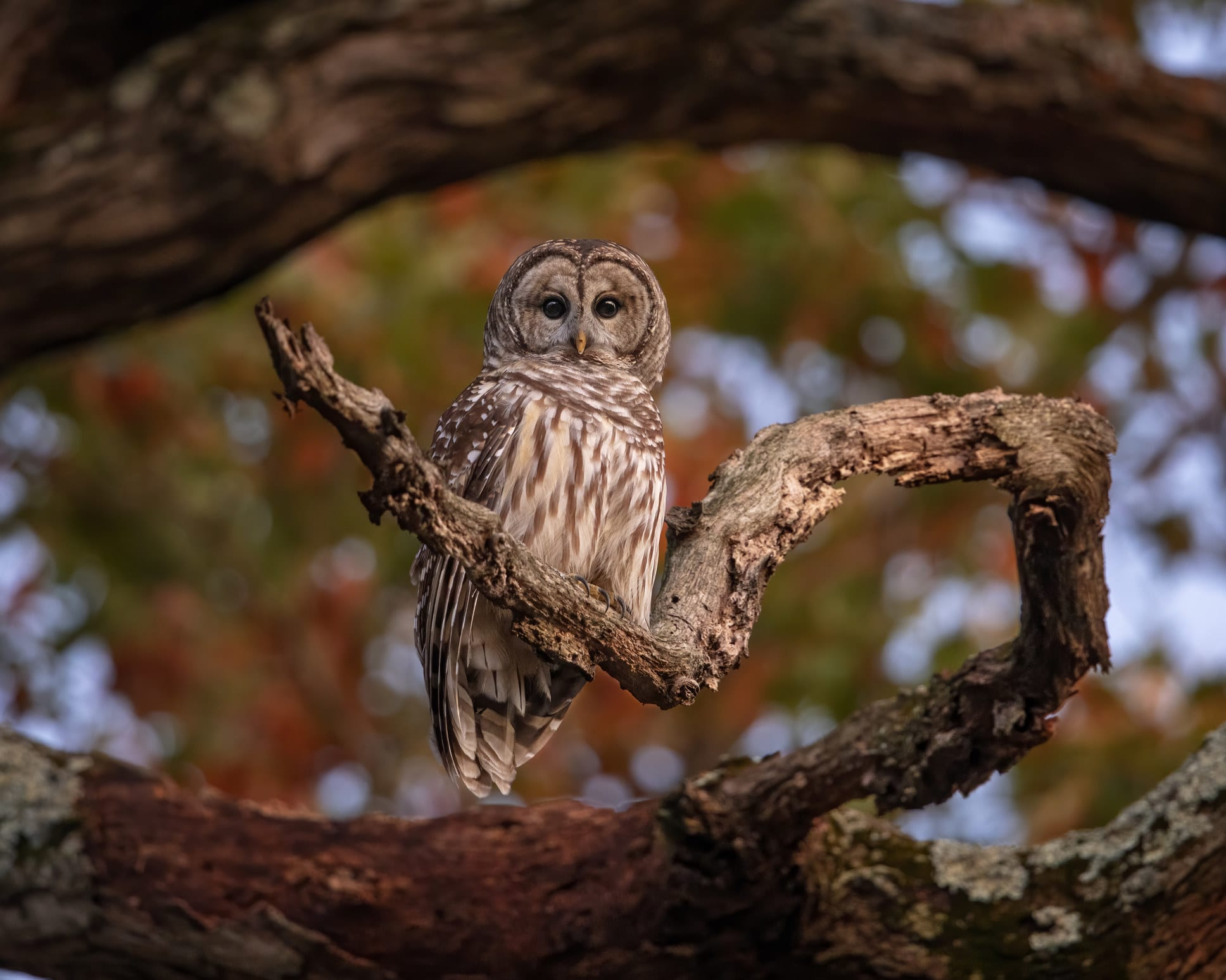 An owl perched on a tree