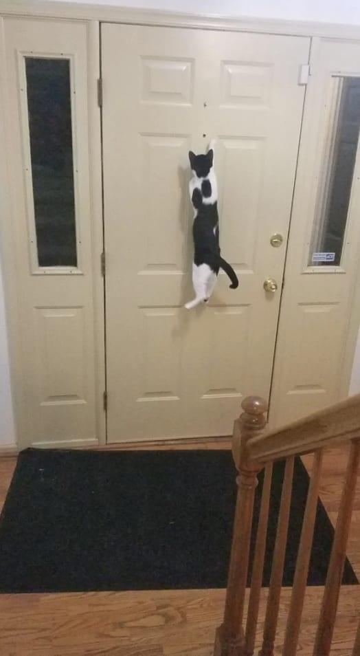 Gato pulando na porta.