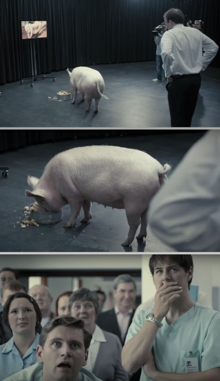 The prime minister walking closer to the pig in a TV studio