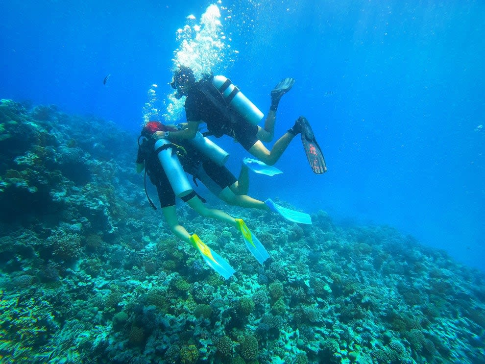Scubadivers observing anthias moving around their home fire coral in Red Sea