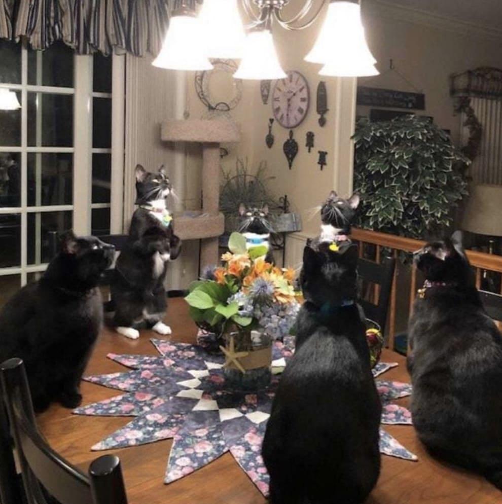 Seis gatos reunidos em um círculo.
