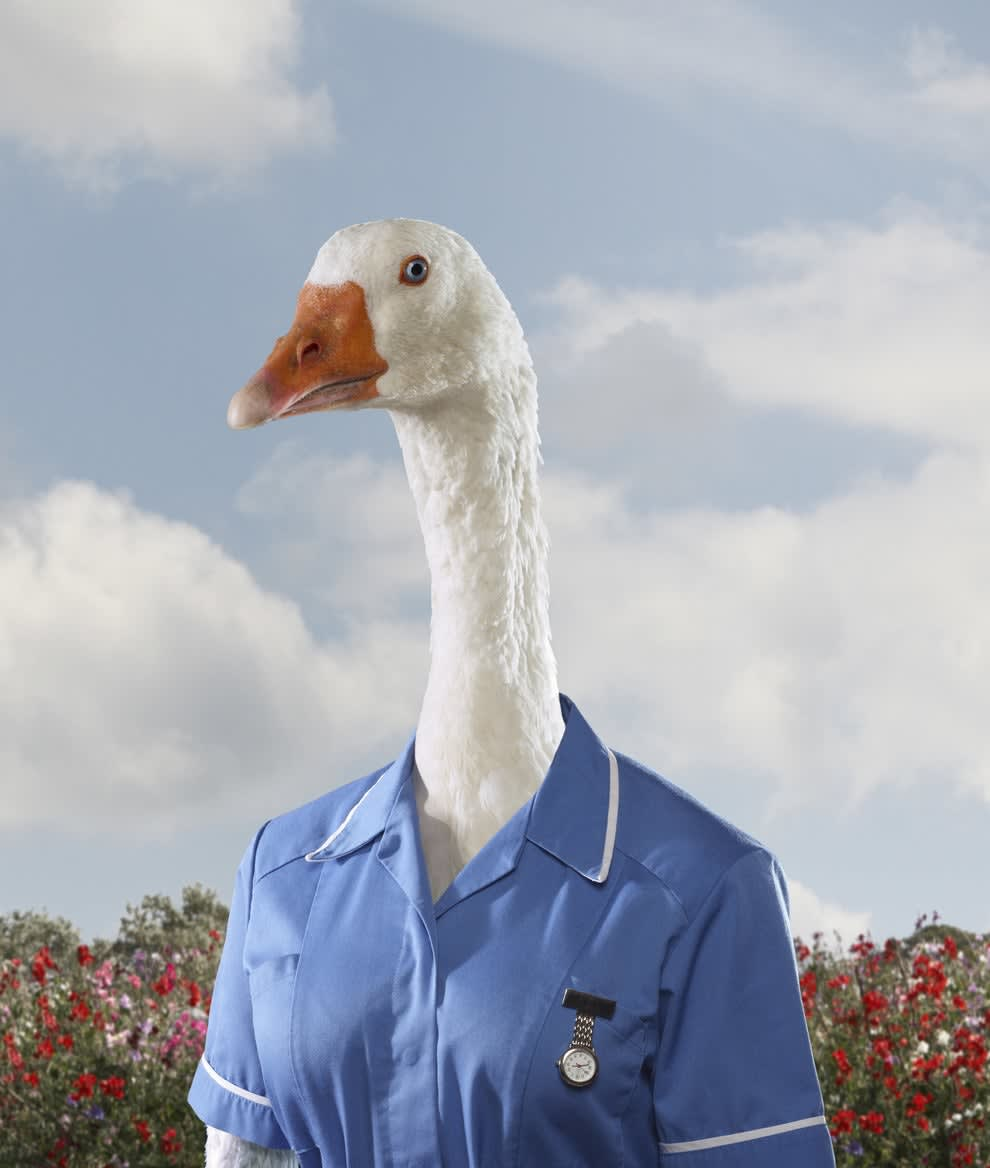 goose wearing a nurse outfit