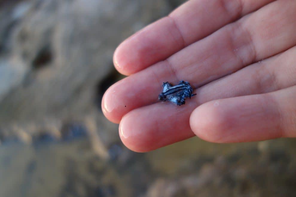 um dragão azul na mão de uma pessoa, menor que uma moeda de um centavo