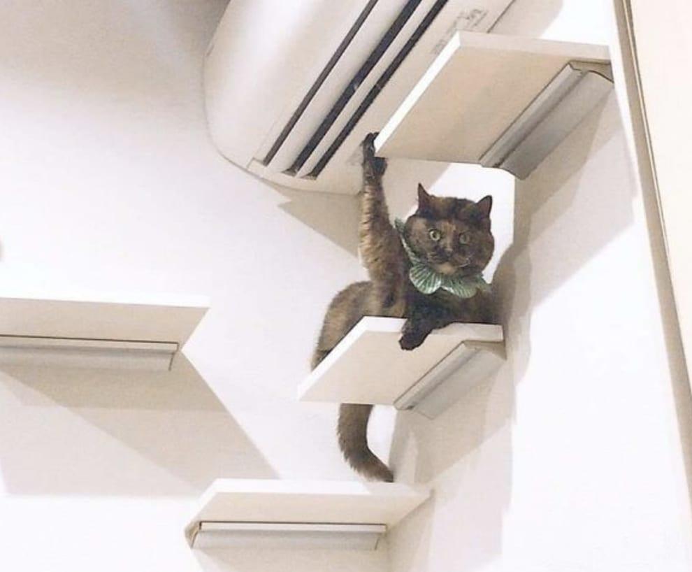Gato com a pata para cima.