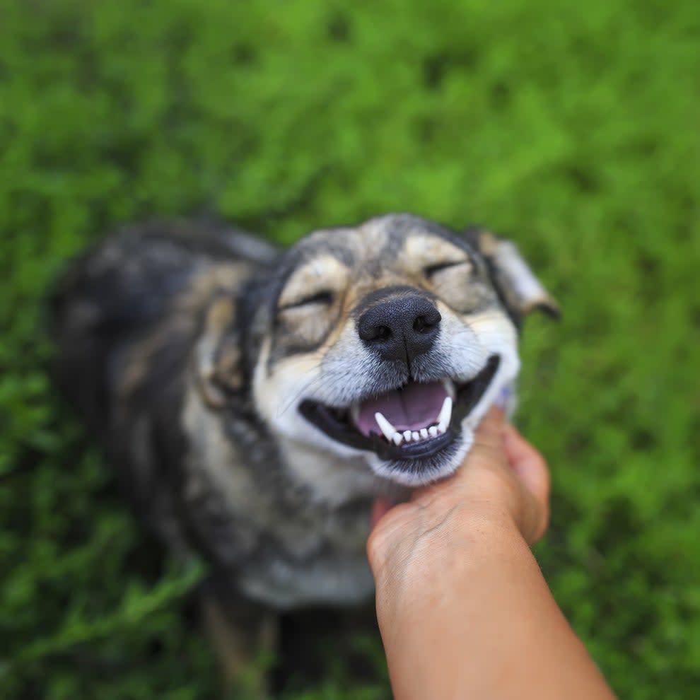 Foto de um cachorro recebendo carinho feliz
