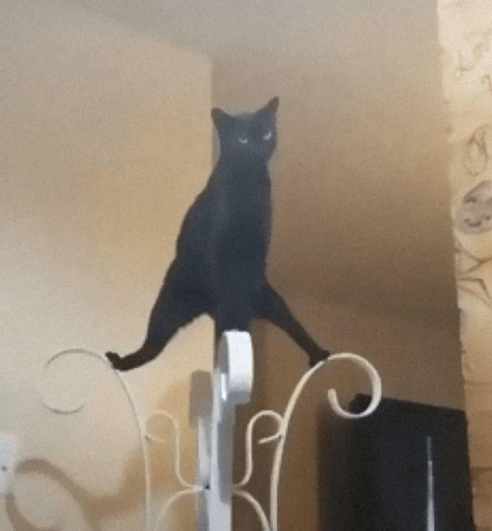 Gato em pé em cima de uma chapeleira.