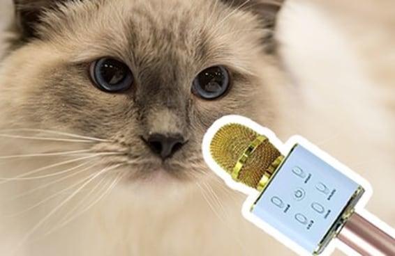 Por que você deveria dar um microfone para o seu gato?