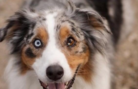 19 cães adoráveis que farão do seu Instagram um lugar melhor
