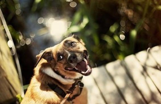 18 cachorros sorrindo de orelha a orelha