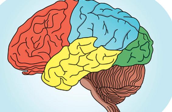Monte um filme e diremos qual é o lado dominante do seu cérebro