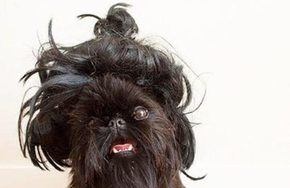 A prova definitiva de que cachorros ficam muuuuuuito melhores do que os homens com coque