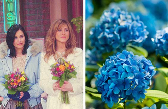 Qual tipo de flor melhor representa sua verdadeira personalidade?