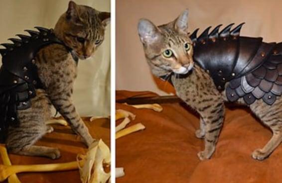 Existe uma empresa que vende armaduras para gatos