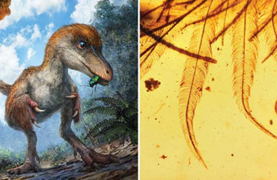 Esta é a aparência das penas do rabo de um dinossauro