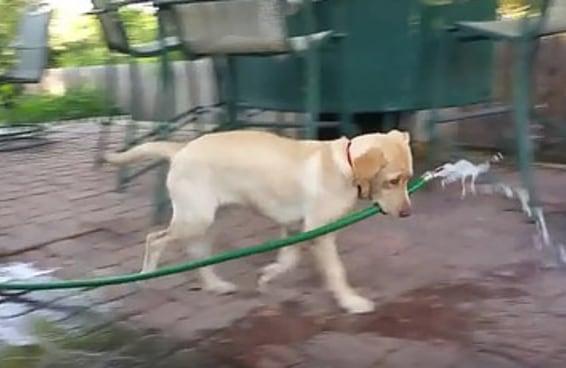 Esta cadela forte e independente não precisa de nenhum homem para ajudá-la a encher sua piscina