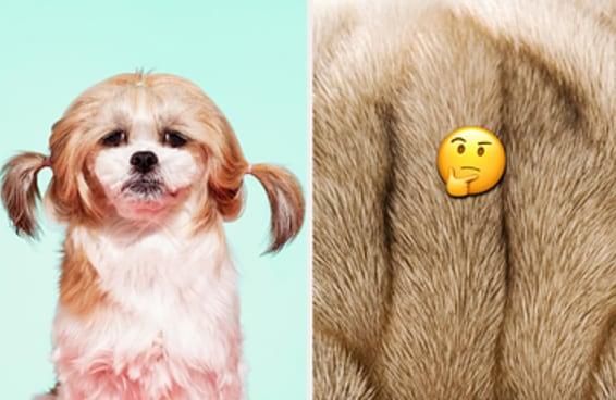 Você consegue identificar estes cachorros bem de pertinho?