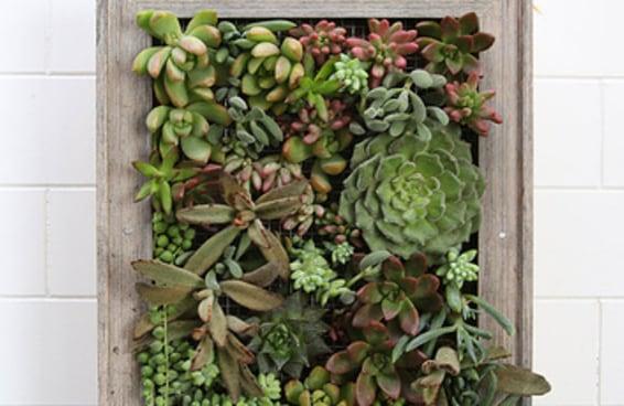 Transforme plantas em arte com este jardim vertical
