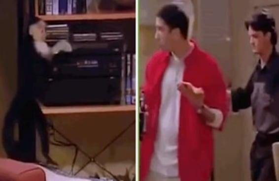 """Nem o pessoal de Friends ficou imune à música """"Deu Onda"""""""