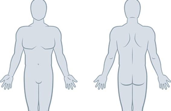 Você consegue se sair melhor do que as outras pessoas neste teste sobre o corpo humano?