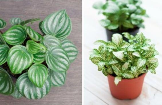 9 plantinhas para ter em casa e que são super fáceis de cuidar