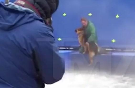 """Vídeo que mostra cão sendo forçado a entrar na água no set de """"Quatro Vidas de um Cachorro"""" será investigado"""