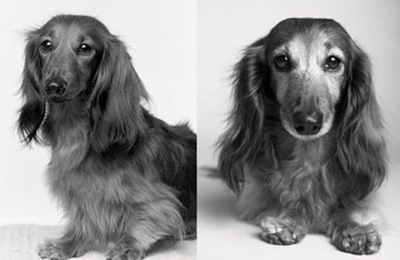 Estas fotos de cachorros idosos vão mexer com suas emoções