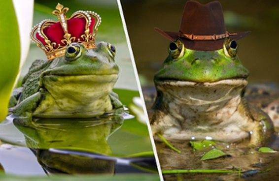 Qual sapo de chapéu é você?