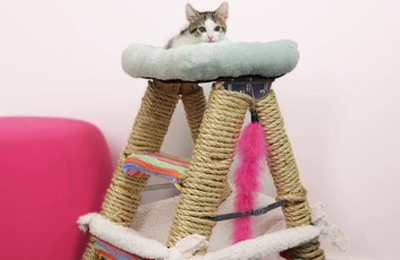 Teste suas habilidades construindo esta academia para gatos