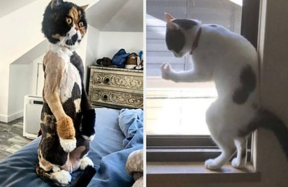 17 gatos que foram flagrados em momentos muito estranhos