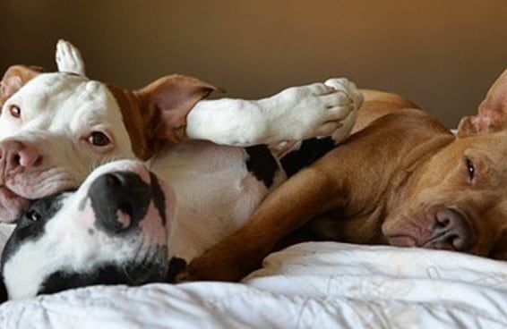 Essa família de cachorros resgatados irá derreter seu coração