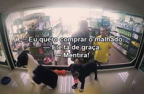 ONG troca animais à venda em pet shops por outros para adoção